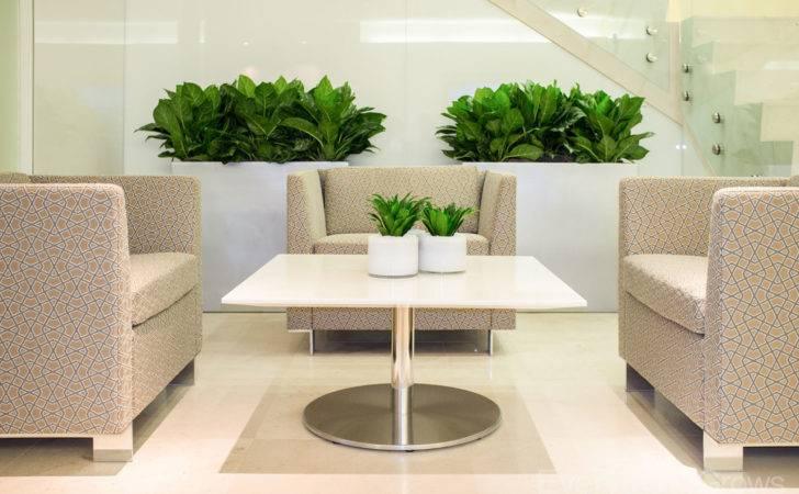 Just Small Sample Interior Plant Design
