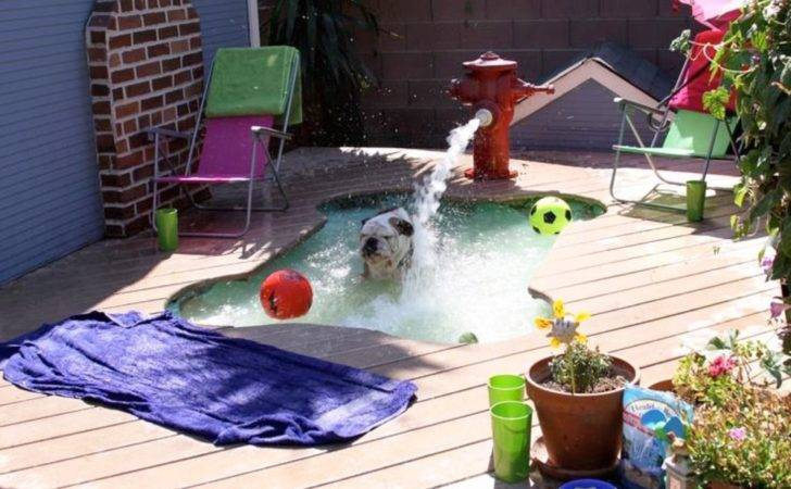 Keep Your Dog Cool These Diy Pool Ideas