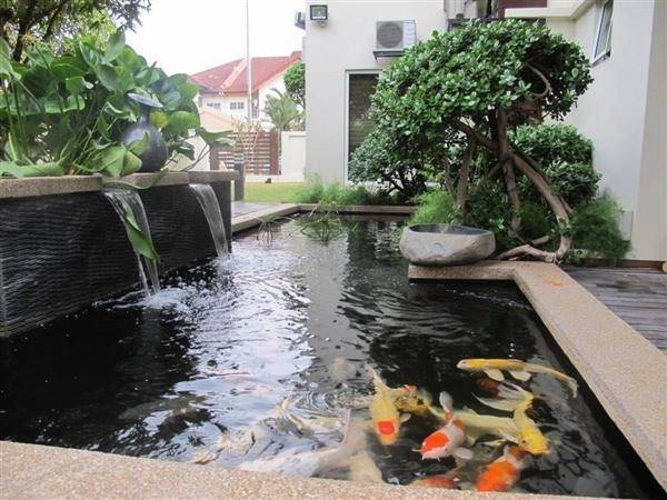 Koi Fish Pond Ponds Designs