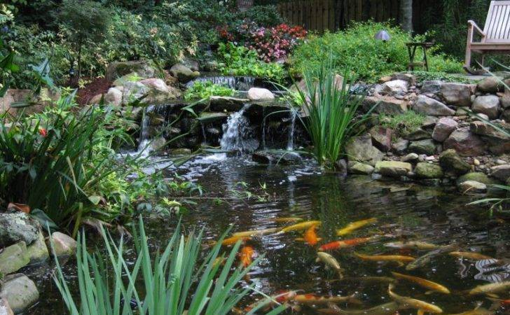 Koi Goldfish Pond Tips Yard Ideas Blog Yardshare
