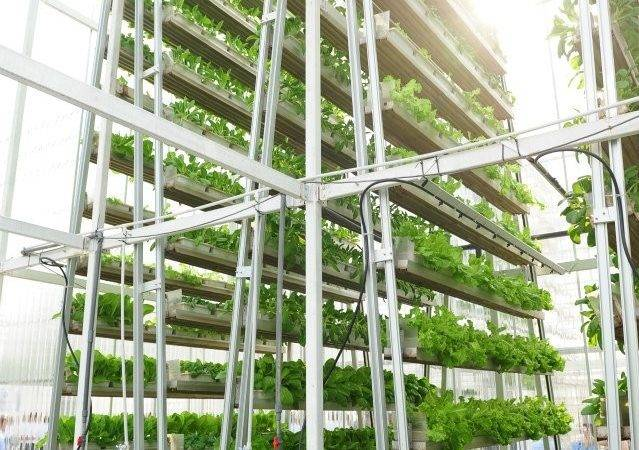 Land Scarce Singapore Has Its First Vertical Farm Plot