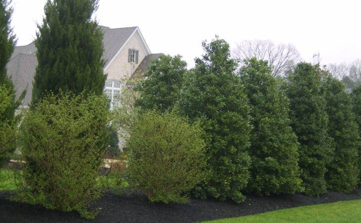 Landscape Employment Middle Tennessee Privacy Screen Trees Shrubs
