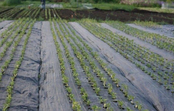 Landscape Fabric Vegetable Gardens Deck Designs Maryland