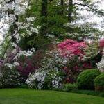 Landscapes Garden Privacy Landscaping Ideas Front Yard