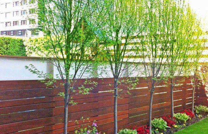 Landscaping Along Fence Pinterest Privacy