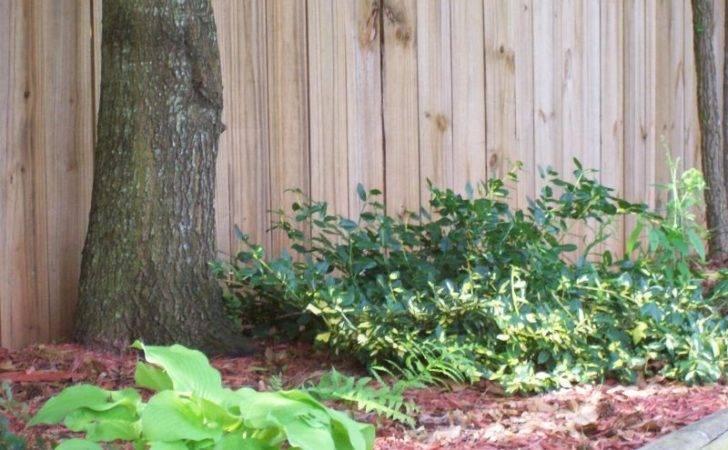 Landscaping Ideas Backyard Fence Line Yardshare
