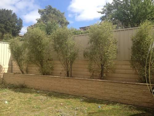 Landscaping Ideas Hiding Colourbond Fence