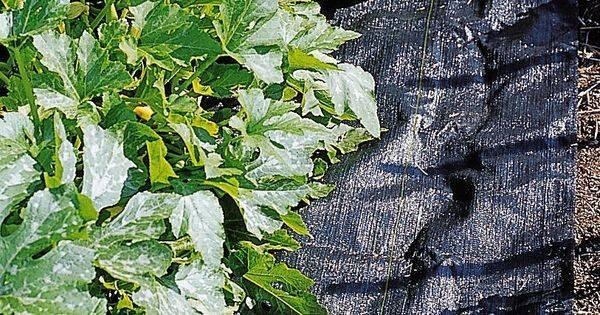 Landscaping Weed Block Pro Mat Cloth Gardener Supply