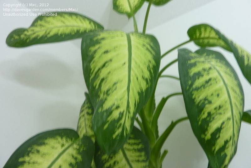 Large Leaf House Plant Identification Book Covers