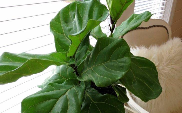Large Leaf House Plants Always Name Your Houseplants