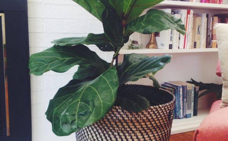 Large Leaf House Plants Favorite Indoor Houseplants Love