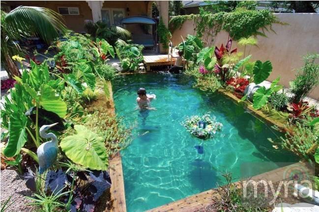 Large Plants Around Small Pool Myria