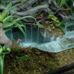 Lazy River Tank Turtle Fish Tanks Pinterest