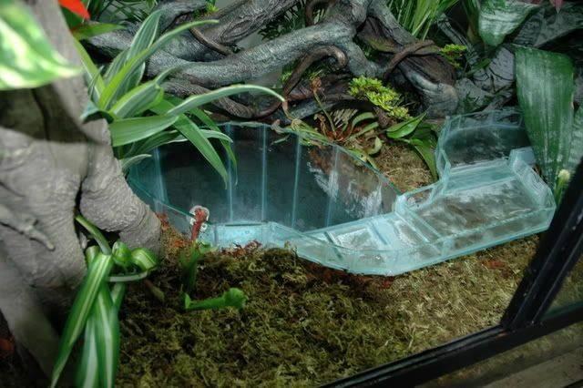 Lazy River Tank Turtle Fish Tanks Pinterest