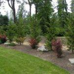 Leyland Cypress Landscape Ideas Placed Border