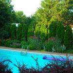 Leyland Cypress Trees Were Encroaching Over Pool Deck