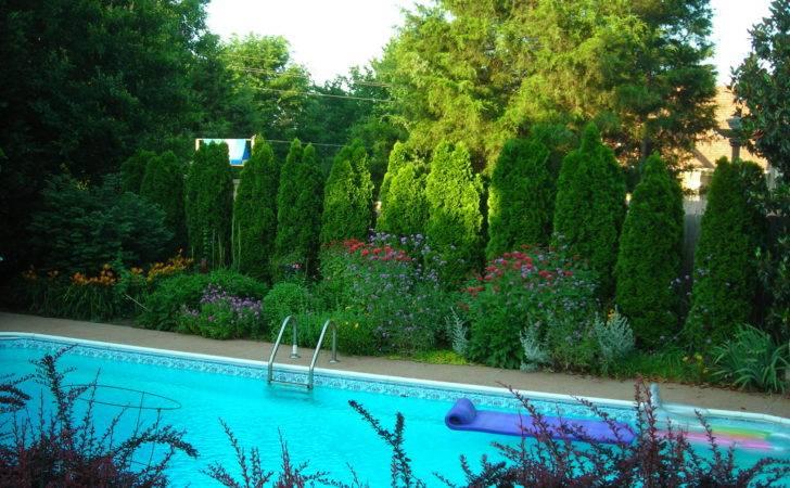 Leyland Cypress Trees Were Encroaching Over Pool Deck