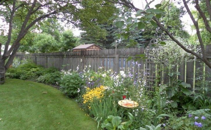 Like Plant Along Fence Crame Cordifolia Zone