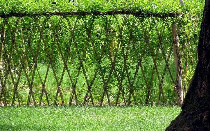 Living Fence Plants Ideas
