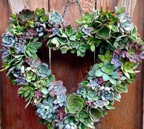 Living Succulent Heart Wreath Garden Funky Pinterest