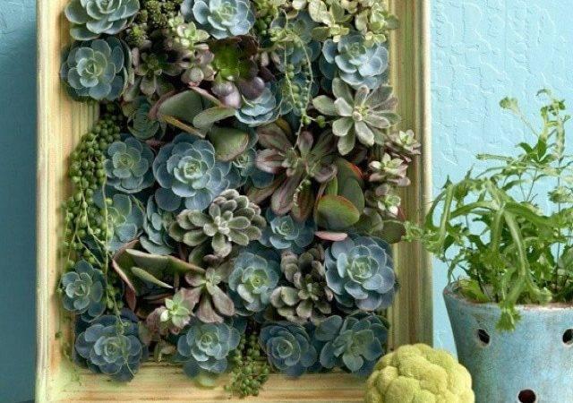 Living Succulent Wall Art Cafes Kiosk Diner Pinterest