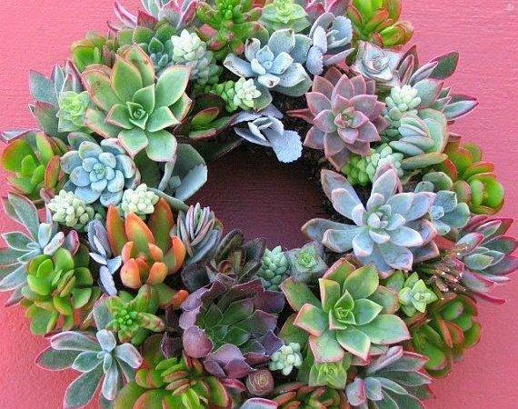 Living Succulent Wreath All Natural Hand Made Cactuslimon