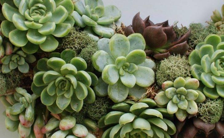 Living Succulent Wreath Plants Garden Pinterest