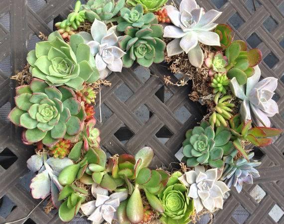 Living Succulent Wreath Succulentsuccotash Etsy