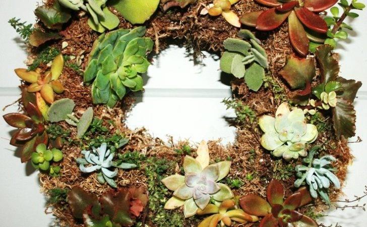 Living Succulent Wreath Wreaths Pinterest