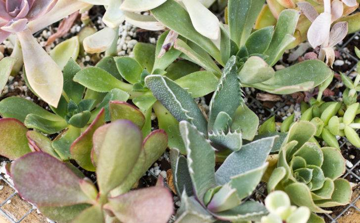 Living Succulents Succulent Frame Growth