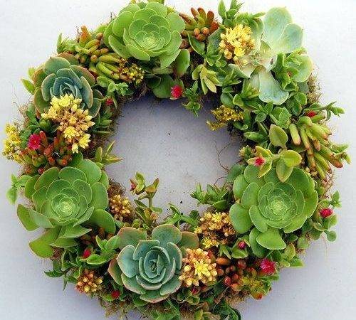 Living Wreath Drought Tolerant Requires Made Wreaths
