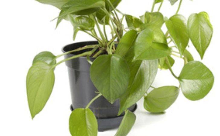Low Light Tropical Indoor Plants Ehow