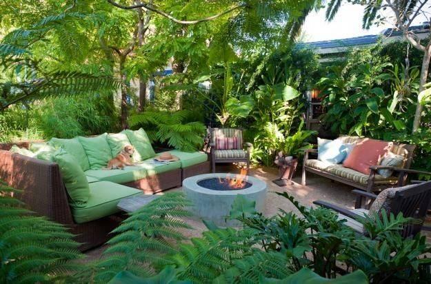 Lush Tropical Drought Tolerant Plants Bromeliads Orchids Tree