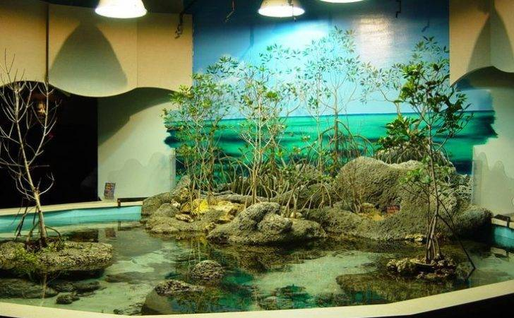 Luxury Aquarium Decorating Aquascapes Pinterest