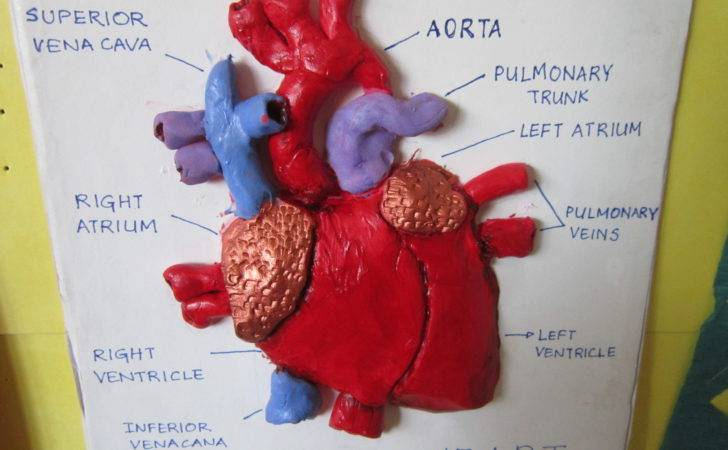 Make Clay Heart Model Gis News Primary Department