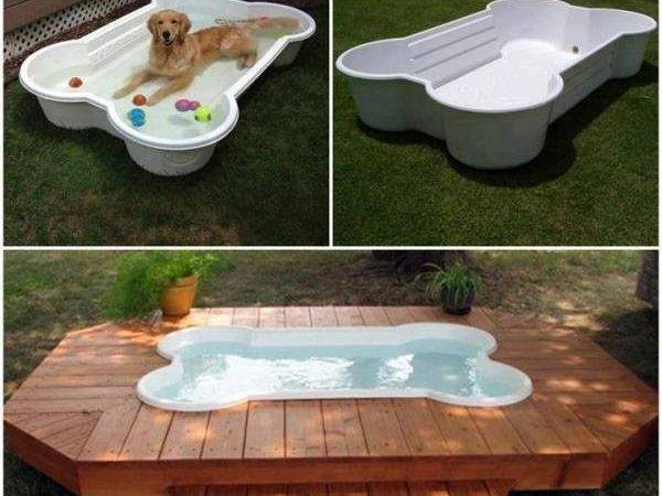 Make Dog Pool Shaped Like Bone Diy Find Fun Art