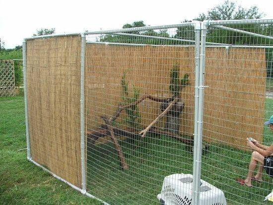 Make Your Own Outdoor Cat Enclosures Diy Cage Pets