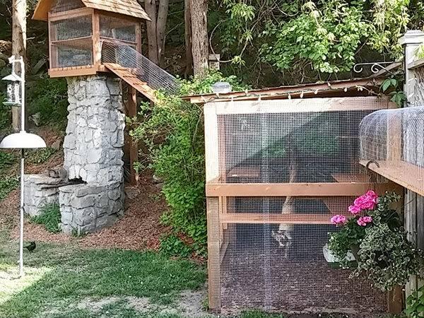 Make Your Own Outdoor Cat Enclosures Easy Diy Enclosure