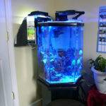 Marvelous Fish Tank Bedroom Your Aquarium General