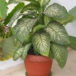 Matelic Large House Plants