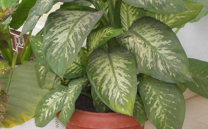 Matelic Large House Plants