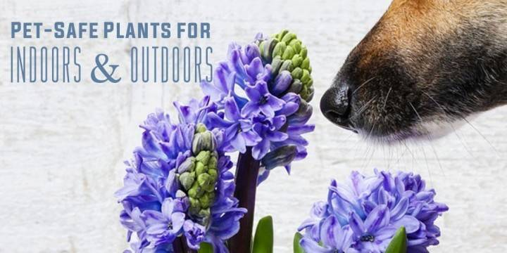 May Ftd Flowers Coupon Off Code