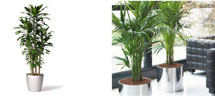 Medium Interior Plants Large Tropical Outdoor