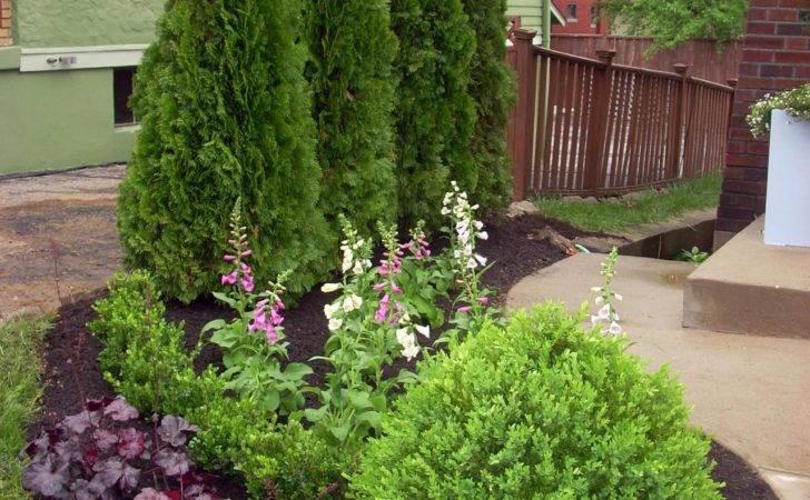Mixed Screen Plants Layering Evergreens Flowering Shrubs