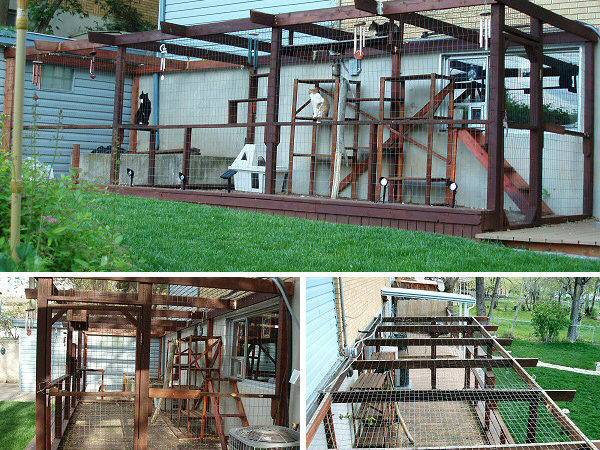 More Happy Cats Experiencing Freedom Safety Perfection