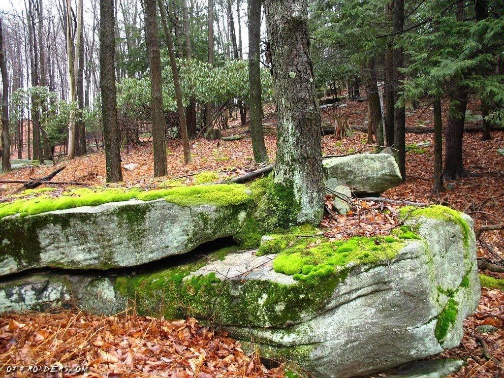 Moss Rock Garden Design Here Landscaping Ideas