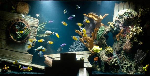 Most Extreme Aquariums World Your History