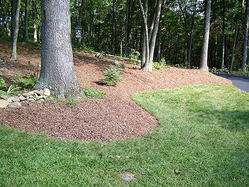 Mulch Area Front Yard Alternative