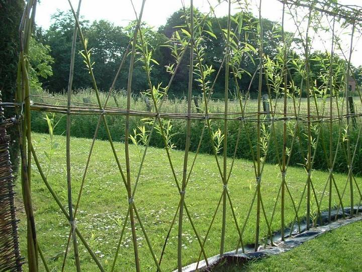 Natural Garden Fencing Options Thayer Reed