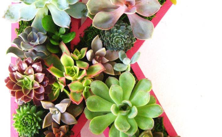 Natural Handmade Living Succulent Decorations Style